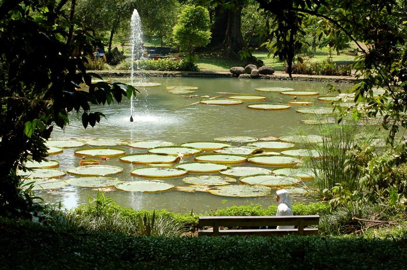 Bogor_Botanic_Gardens_lily_pond