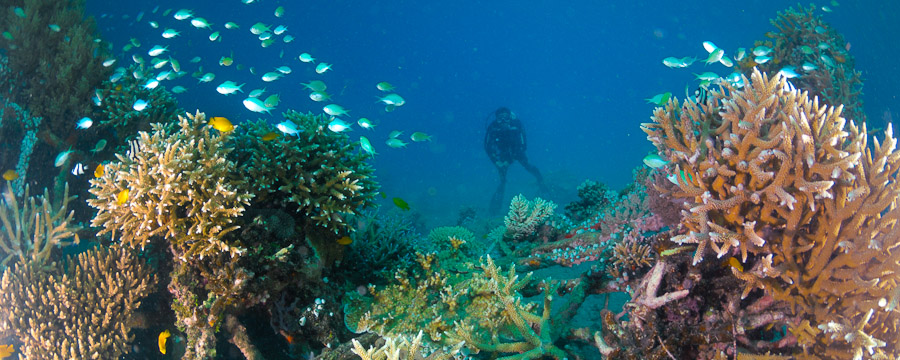 matahari-reefs-tulamben
