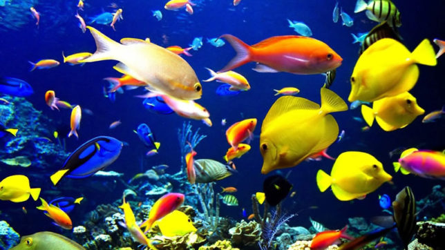 ornamental fish for your aquarium