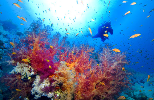 paradise-reefs-tulamben