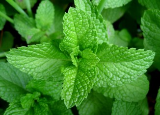 3 Things You Can Do With Mint