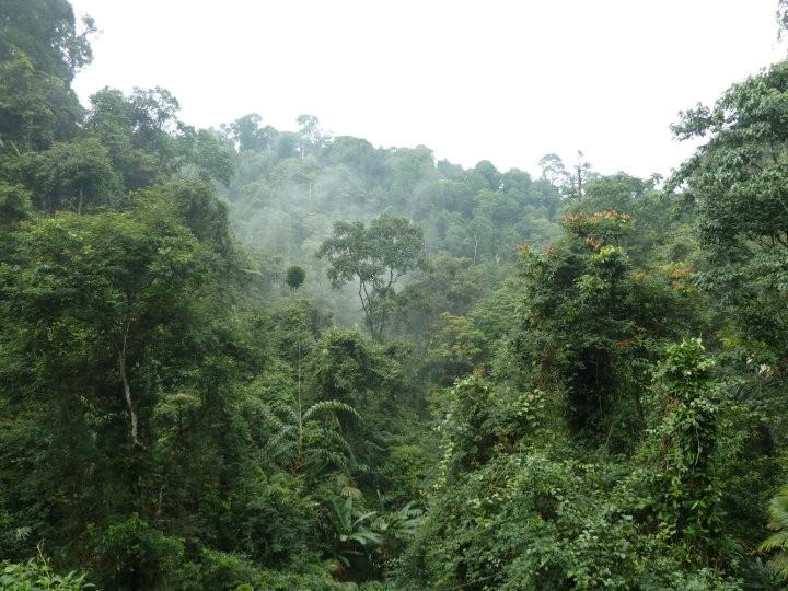 forest gunung gede
