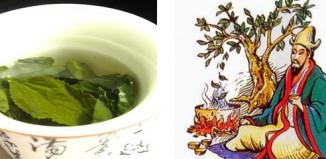 The History of Tea & Health