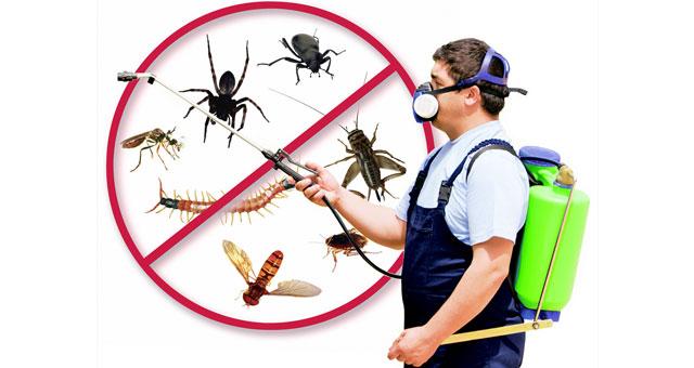 Hints: Pest Control