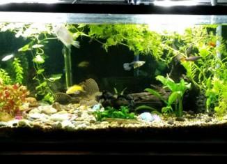 Start an Aquarium