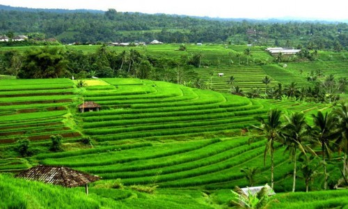 SUBAK Irrigation in Bali, on Unesco World Heritage List
