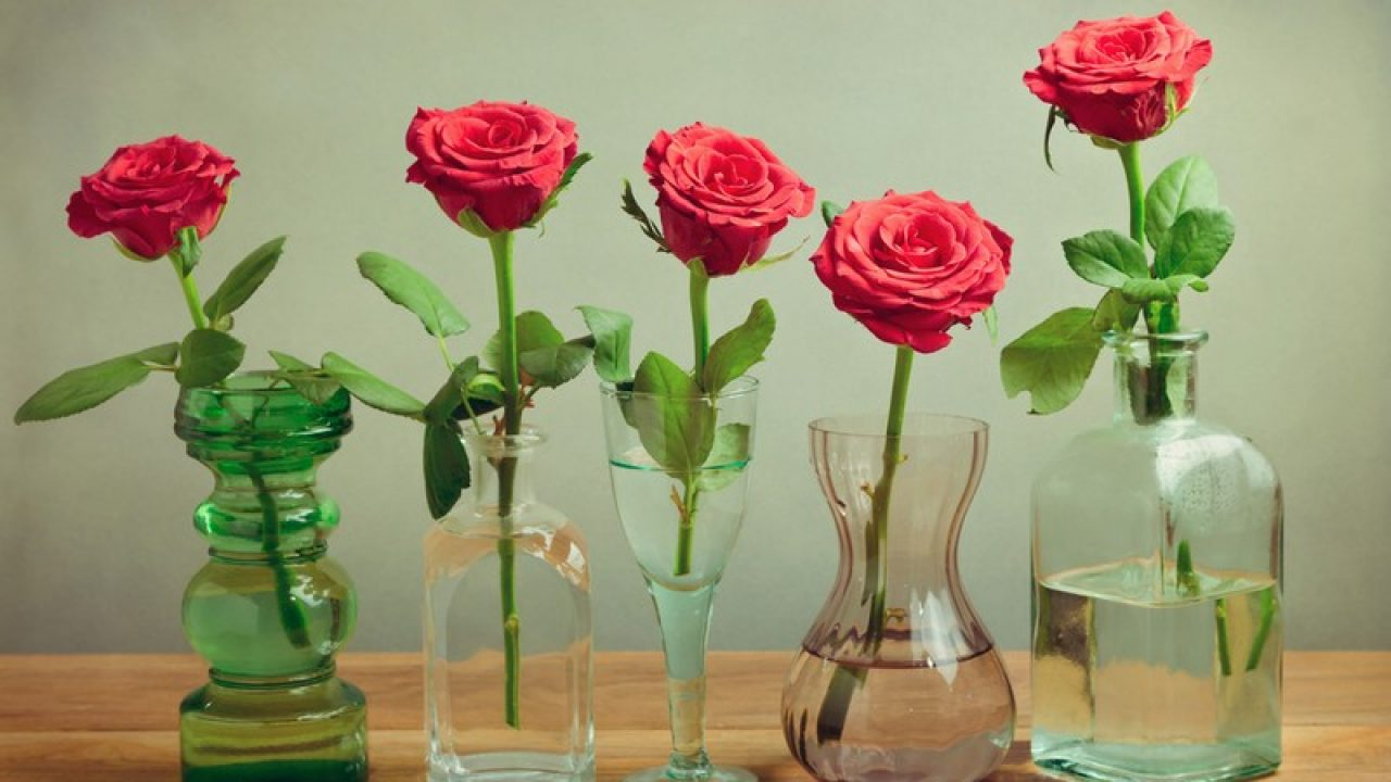How To Make Flowers Last Longer Tips To Keep Plants And Flowers