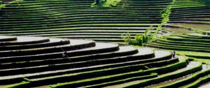 Subak (irrigation) SUBAK Irrigation in Bali on Unesco World Heritage List Indoindians