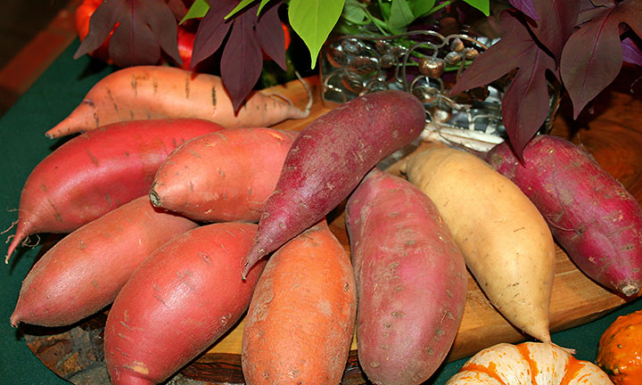 Nutritious Sweet Potatoes
