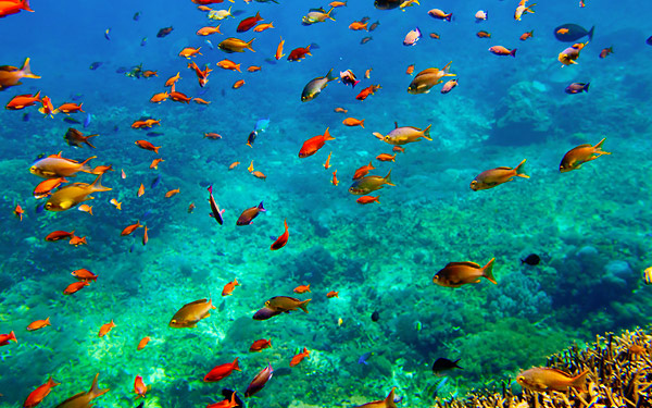 7 Recommended Diving Spots in Indonesia