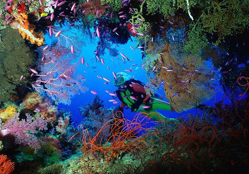 Breathtaking View in Raja Ampat's Underwater