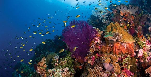 Colorful Corals in Wakatobi's Underwater
