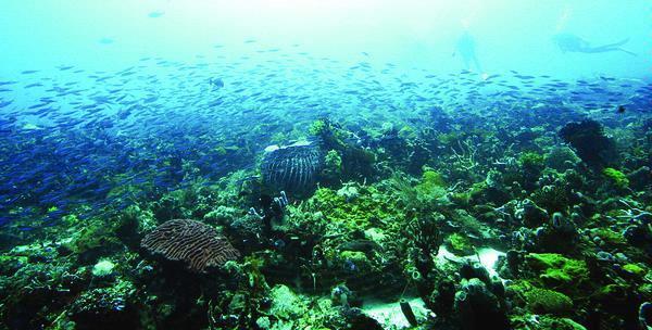 Karimunjawa's Pistureque Underwater