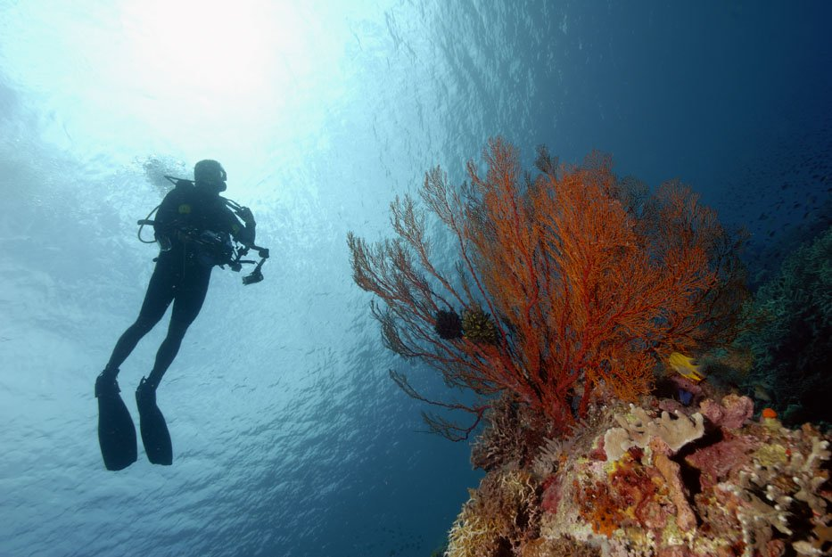 One of the Beautiful Corals You Can See in Derawan