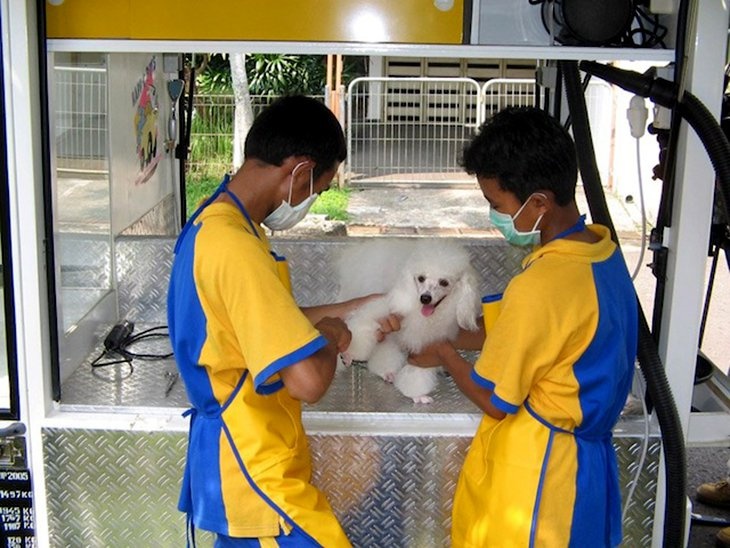 6 Recommended Pet Salons And Grooming Services In Jakarta Indoindians