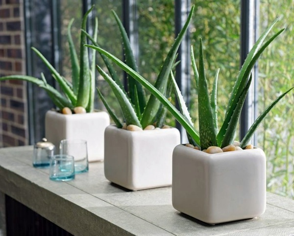 Air-Cleaning Indoor Plants to Liven Up Your House