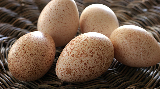 Why We Don't Eat Turkey Eggs?
