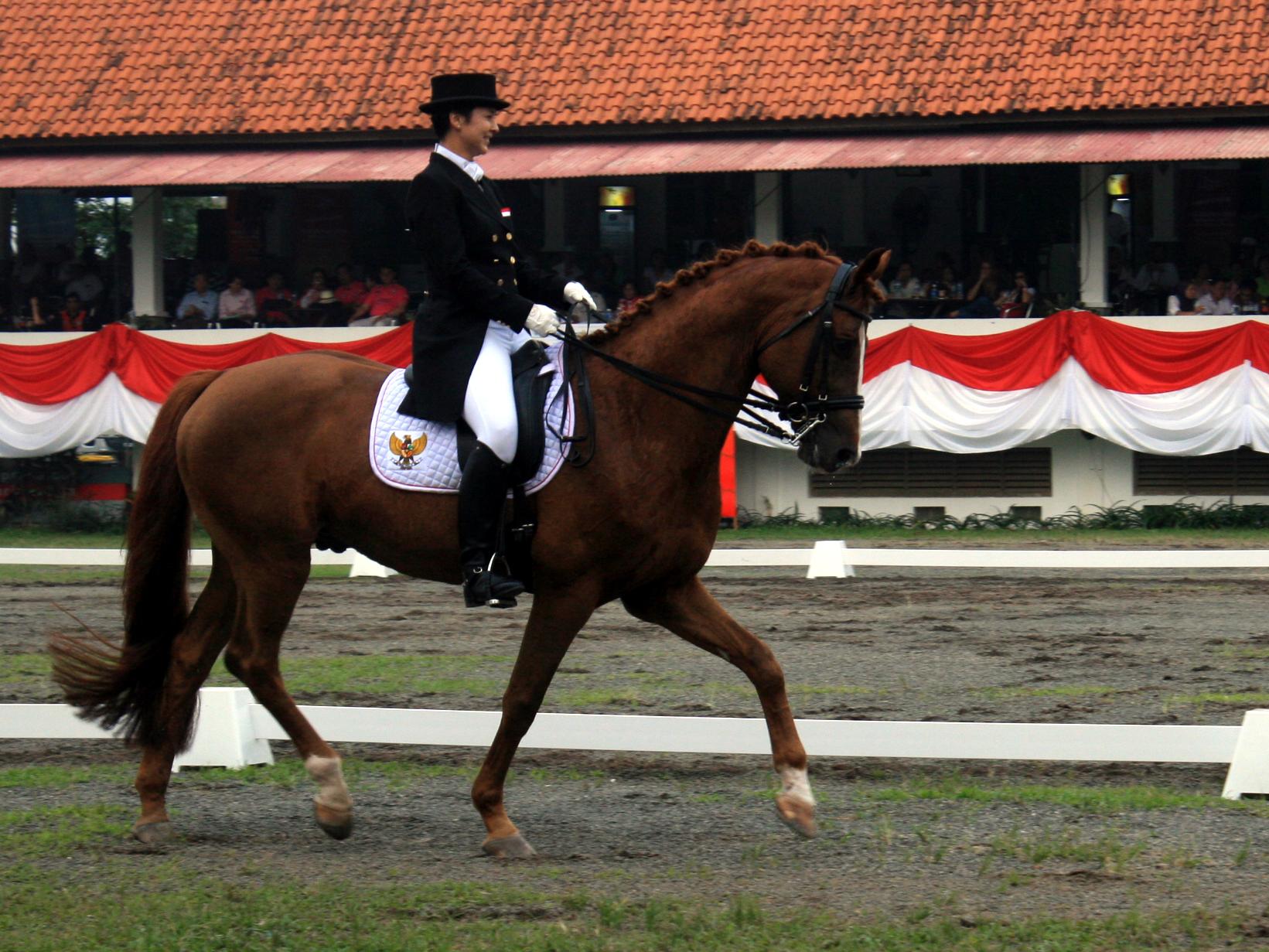 gading-equestrian