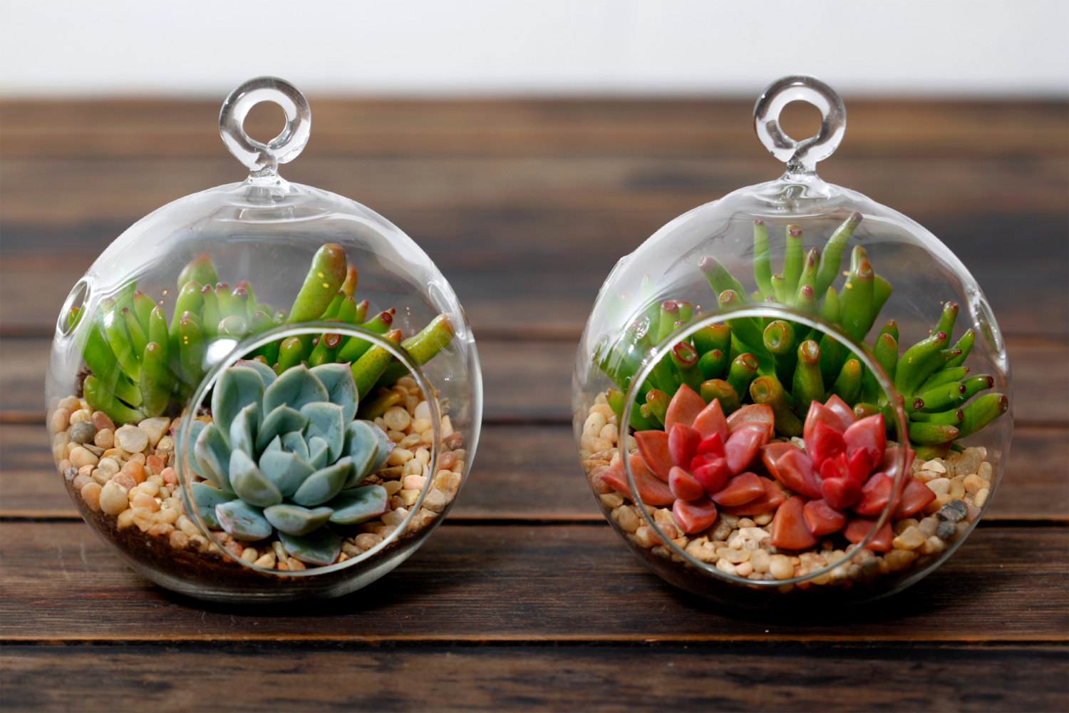 Let's Make DIY Terrarium