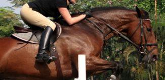 7 Horseback Riding Lessons around Jakarta