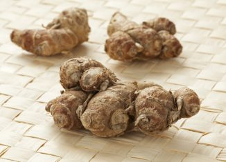 Kencur: The Wonderful Herb with Many Benefits