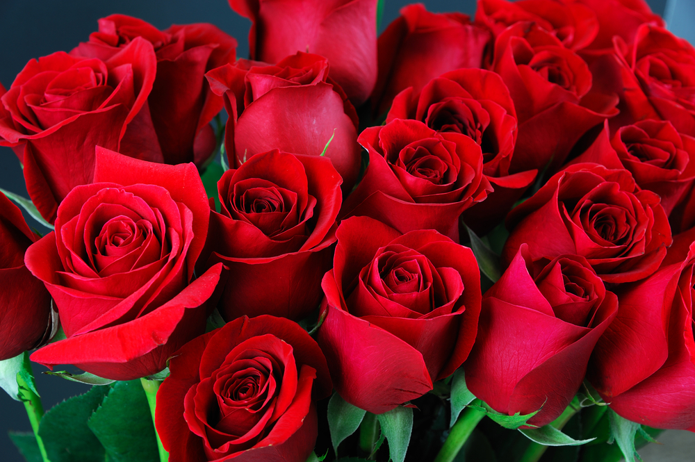 Why Do Red Roses Signify Love?