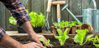 Why Gardening is Good for Your Health