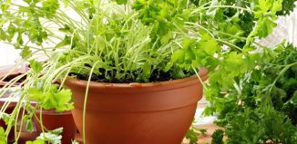 6 Edible Plants You Can Grow Indoors