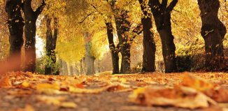 5 Places to Visit and Enjoy Autumn Colors