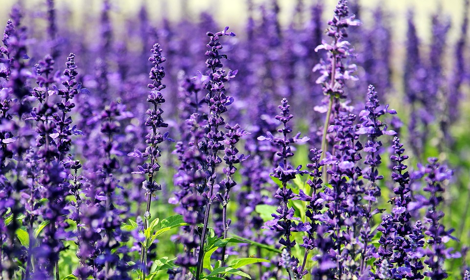 Sniff your way to happiness: scents to boost your mood
