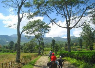 visit-puncak-for-relaxed-holiday-with-family-agro-wisata-gunung-mas-indoindianscom