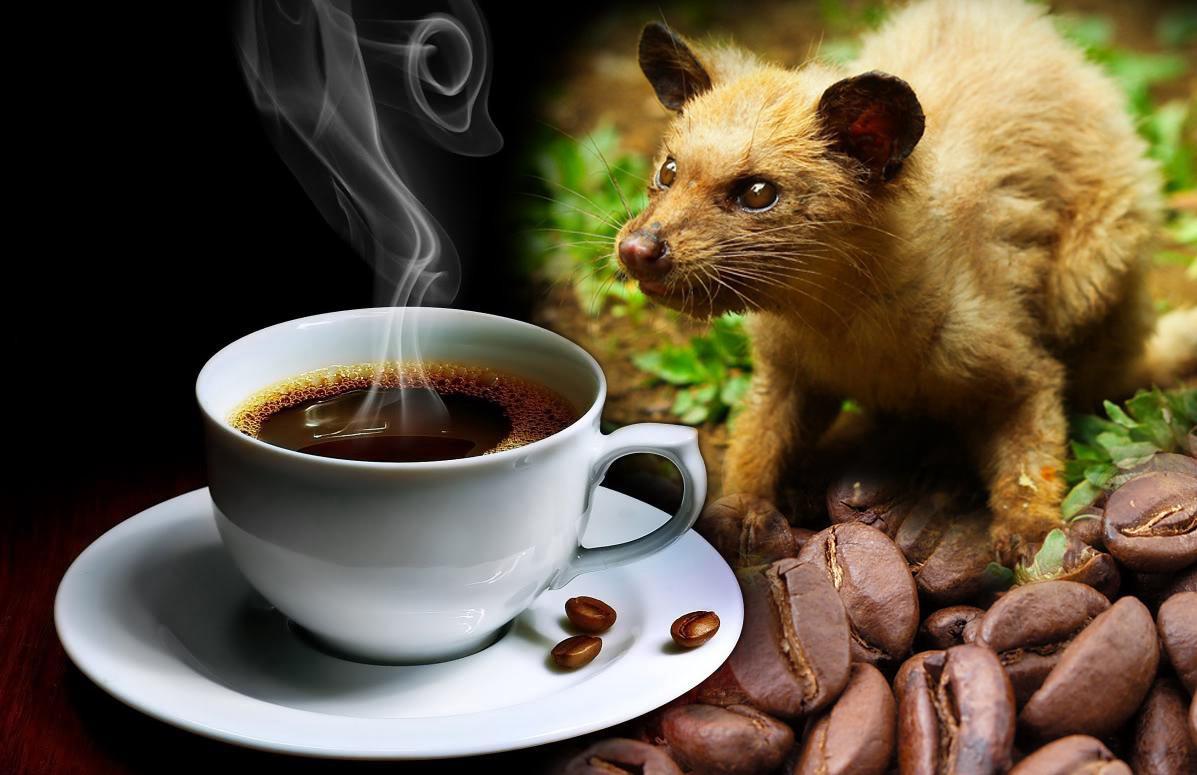 luwak-cofee-top-indonesian-souvenir-from-bali