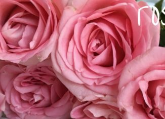 Edible Roses for Valentine's Day