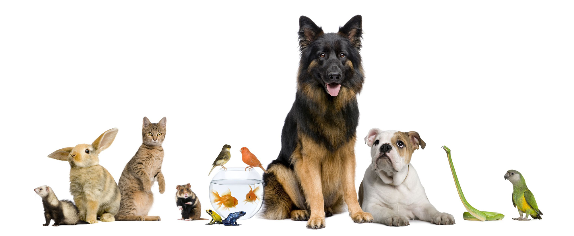 6 Tips to Choose the Perfect Pet-Sitting Service
