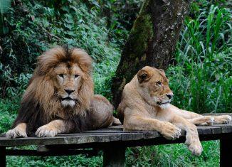 6-Theme-and-Amusement-Parks-in-Indonesia-Taman-Safari-Indonesia