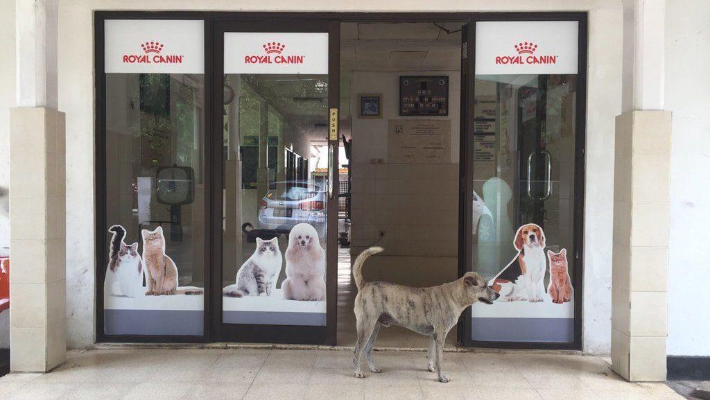 6 Dog Sitting Services In Jakarta Indoindians Com