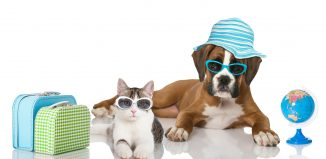 Pet-Relocation-Preparation-Procedures-and-Documentation