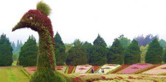 Enjoy-Flora-at-Taman-Bunga-Nusantara