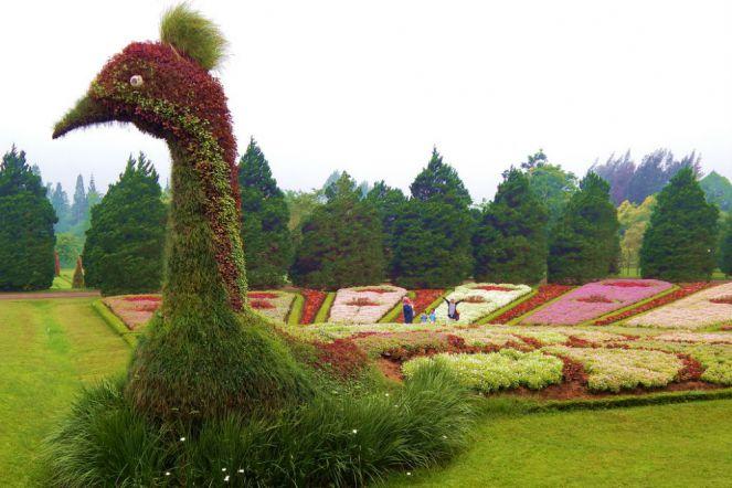 Enjoy Flora At Taman Bunga Nusantara Indoindians Com