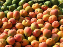 7 Types of Delicious Indonesian Mangoes to Try
