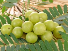 10-Kitchen-Ingredients-to-Boost-your-Immunity-Amla-Indian-Gooseberry