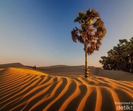7-Magnificent-Deserts-to-Visit-in-Indonesia-Oetune-Beach