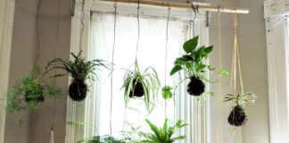 Kokedama 101: What it is, History, How To Make It and More!