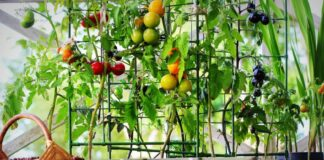 #VerticalGardening: What it is, The Benefits and 4 Plants to Choose