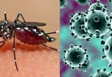 What Is The Difference Between Dengue Fever and COVID-19? Watch Out For These Symptoms Here